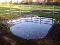 View The Pond/Wildlife Garden Album