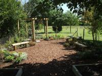 View The Junior School Vegetable/Sensory Garden: Album