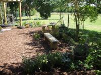 View The Junior School Vegetable/Sensory Garden: Album